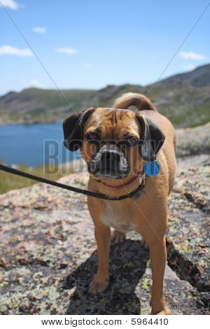 Dog with mountain background