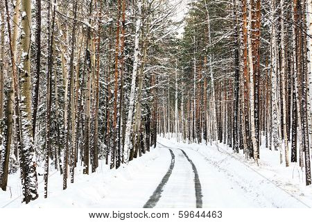 Way in a winter forest
