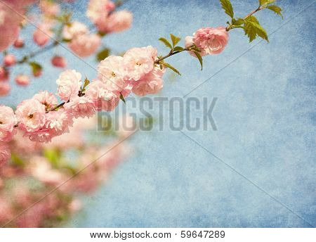 branches with beautiful pink flowers against the blue sky. Amygdalus triloba. Added paper texture. Shallow DOF.