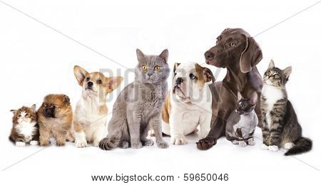 Group of cats and dogs in  white background, cat and dog