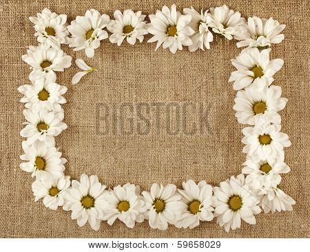 Flowers daisy on a canvas surface texture