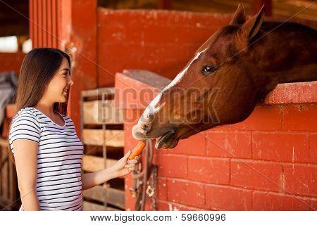 Feeding my horse some carrots