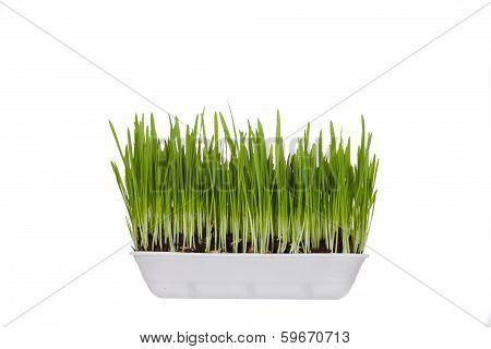 plastic container with young green sprouts