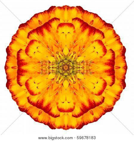 Orange Concentric Marigold Mandala Flower Isolated On White