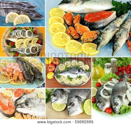 Fresh fish and fish dishes collage