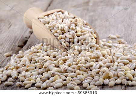 Pearl Barley On A Wooden Shovel