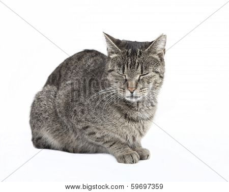 Cat With Eyes Closed
