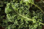 stock photo of kale  - Bunch of Healthy Raw Green Kale Leafy Vegetables - JPG