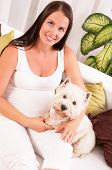 pic of west highland white terrier  - Happy pregnant woman with west highland white terrier relaxing on the sofa - JPG