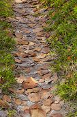 A path lined with with dried brown sea grape leaves in the tropical climes of Bermuda.