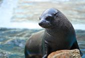 Sea lion on rock