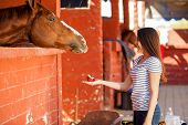 image of feeding horse  - Beautiful young woman feeding her horse with apples in a ranch - JPG