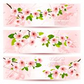 Three spring banners with blossoming sakura branches with spring flowers. Vector illustration.