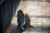 stock photo of baby spider  - a monkey in the cage in the zoo park - JPG