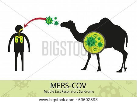 Mers Corona Virus transfer from camel to human