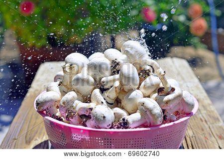 Button Mushrooms.