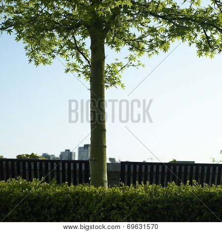 Tree And City View