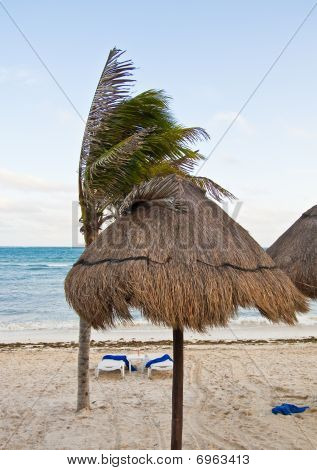Beach Umbrellas And Palm Tree