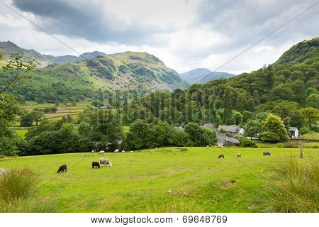 Lake District country scene sheep in field Seatoller Borrowdale Valley Cumbria England UK