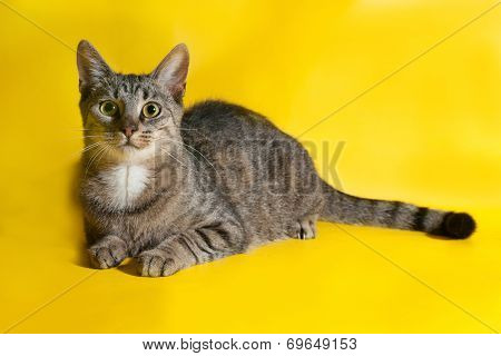Striped Cat Lies On Yellow