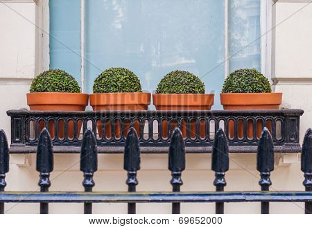 Town House Window Box