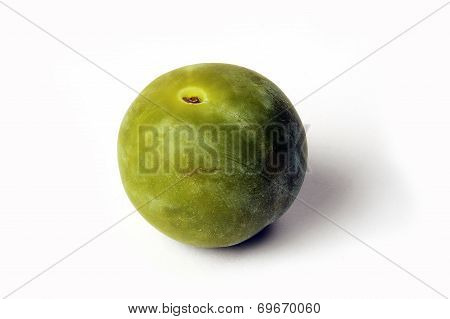 Isolated On White Background In Studio Reine Claude Plum Green