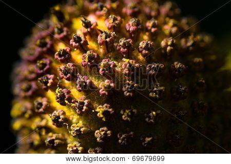 Flower head extreme macro