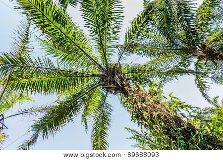 Plantation Of Palms