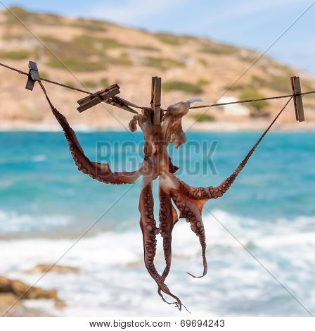 Drying Octopus On Sun. Crete, Greece.
