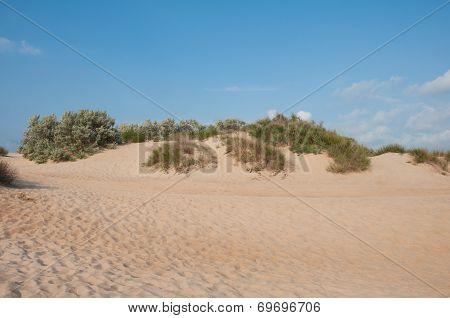Sand Dunes Near The Coast Of The Black Sea Near Anapa, Russia