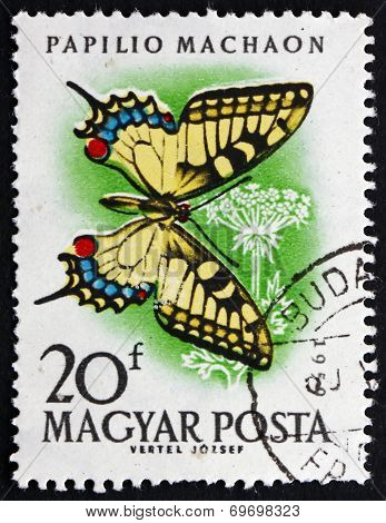 Postage Stamp Hungary 1959 European Swallowtail, Butterfly