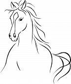 pic of white horse  - horse illustration  - JPG