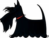 stock photo of scottie dog  - Colorful illustration of the dog Scottie breed - JPG
