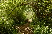picture of canopy  - Pathway under canopy of trees leading to foot bridge - JPG