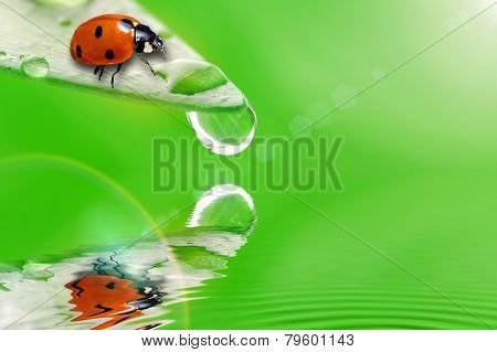 reen Leaf With Ladybug And Water Drop