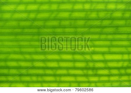 Texture Green Leaf