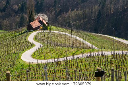 Road in a shape of a heart, Maribor, Slovenia