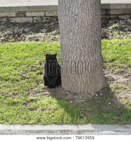 Black Cat Sitting In A Park