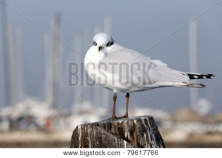 Gull Over The Pole To Moor Ships On The Sea