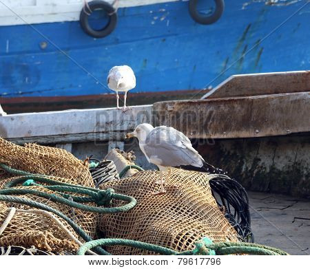 Two Seagulls On Fishing Nets Of A Fishing Vessel