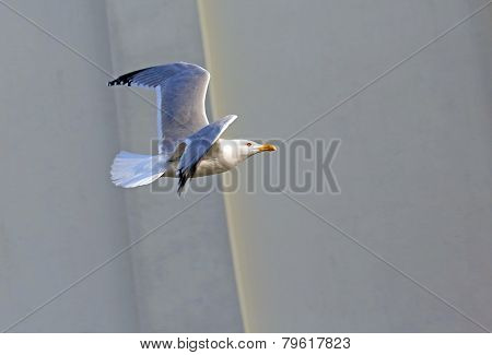 Evolution Of The Flight Of A Seagull In The Sky