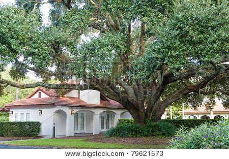 Massive Oak By Clubhouse