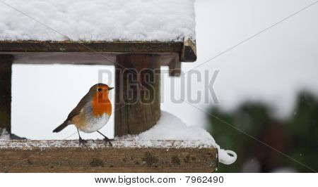 Robin At A Snowy Bird Feeder In Winter