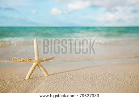 white starfish on white sand beach, with ocean sky and seascape, shallow dof