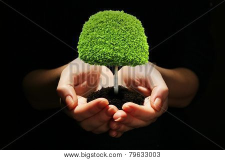 Small tree in hands isolated on black