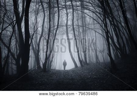 Man in a haunted mysterious forest with fog on Halloween