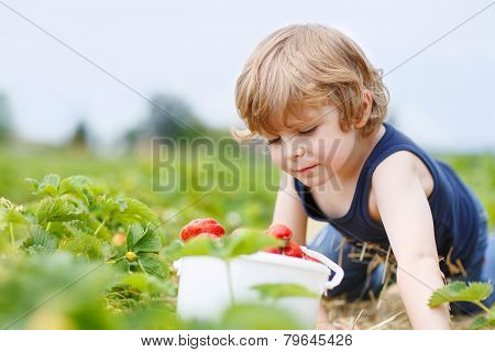 Funny Little Kid Picking And Eating Strawberries On Berry Farm