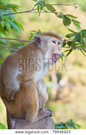 Anger Monkey