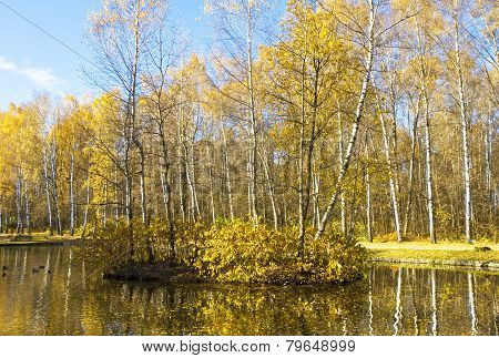 Autumn, Birch Island