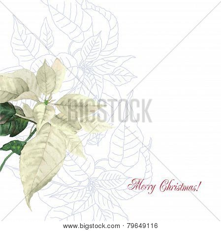 Watercolor background  with poinsettia flowers2-02